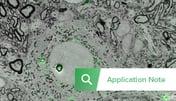 Thumbnail SECOM Application note Neuroscience